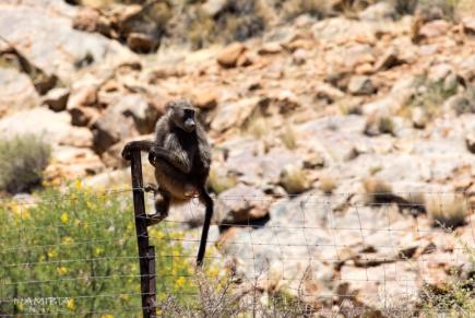 纳米比亚一场流放荒原的旅途 收获亲近万物的真挚